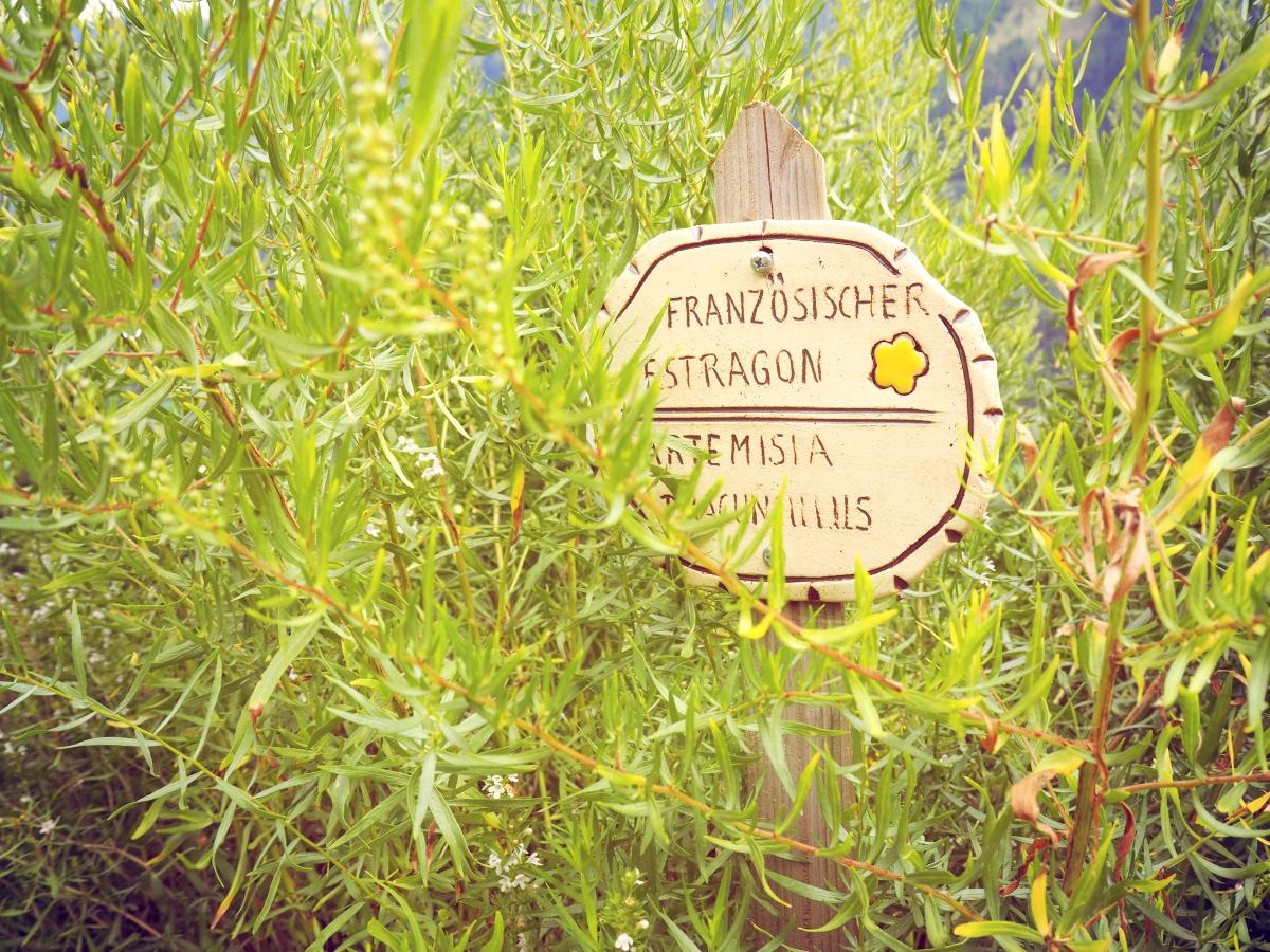 Estragon im Kräutergarten: Bauernherbst Gastein