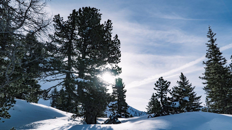 Die winterliche Natur am Graukogel