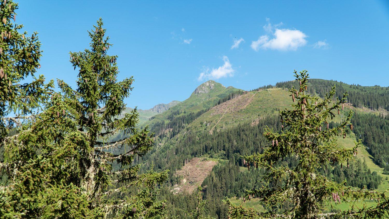 Blick aus einem Wald auf einen Berg