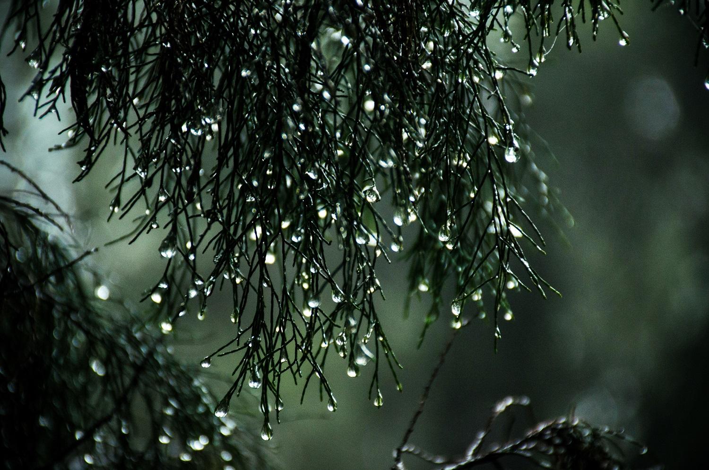 Regentropfen am Baum