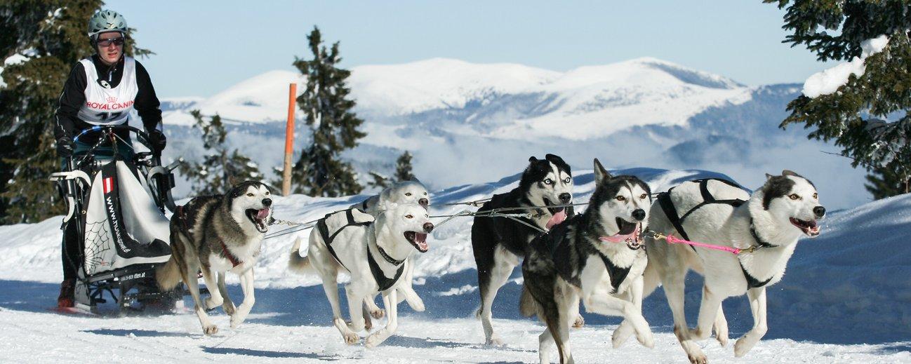 Hundeschlittenfahrt in Sportgastein